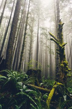 Photo by BC One of the things I absolutely love about Vancouver Island is the amazing temperate rainforest located along the Juan De Fuca Strait. What A Wonderful World, Beautiful World, Landscape Photography, Nature Photography, Tree Forest, The Great Outdoors, Wonders Of The World, Enchanted, Mists