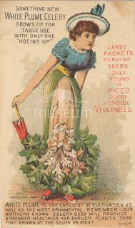 Illuminating Lake County, Illinois History: 19th Century Advertising Trade Cards