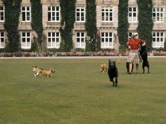 1971 The Queen relaxed with her dogs