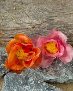 Karelian rose, -brooch,  Everlasting-series. Unique untreated leather, hanmade