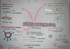 #equinodermos #biologia #resumo