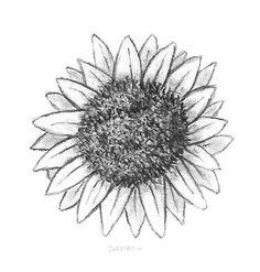 zonnebloem tekening - Google zoeken