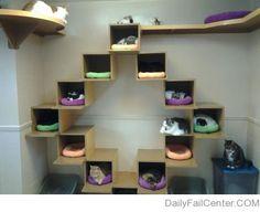 The sad future haha #cats