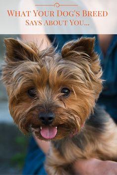 Did you know People often choose dogs who are most like them? See which breed you'd be!