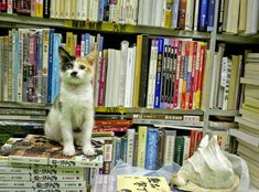 A small bookstore (SAM KEE Bookstore, 森記圖書) in North Point, Hong kong is a little haven for homeless and stray cats. According to Chunli who visited the store recently, the owners of the bookstore have taken in many homeless cats and let them sleep in, play inside, and hang out with their customers. The kitties are given plenty of food and love and attention from everyone in the store. Photos courtesy of ©Chunli Duan (flickr: chunli-duan).