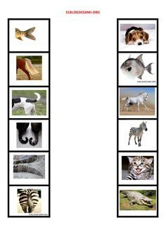 Animal Activities For Kids, Teaching Activities, Teaching Resources, Farmer Duck, Alphabet Tracing, Preschool Education, Montessori Materials, New Print, Science