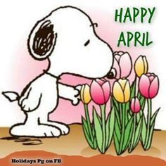 Happy April. Snoopy with tulips.