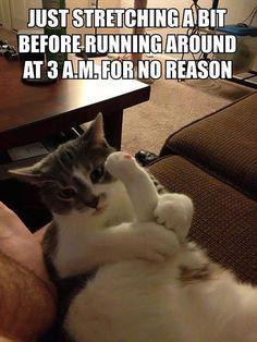Cat workout…