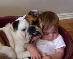 「犬と赤ちゃん」の画像検索結果