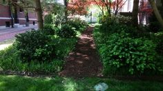 Side yards don't have to be boring - this client transformed her space into a peaceful woodland pathway. A thick layer of mulch prevents the walkway from becoming too muddy while a mixture of groundcovers and slow growing shrubs keeps the side yard low maintenance and relatively weed free.