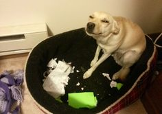 Go on, tell them I ate your homework. They'll never believe you.