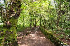 Más zonas del bosque de Aldán en Cangas, fotografíadas por Jaime Varela #Galicia #SienteGalicia #RíasBaixas    ➡ Descubre más en http://www.sientegalicia.com/