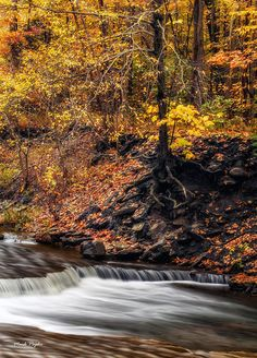 A river flows cleanly, white water rushing over rocks in the perfect fall setting.