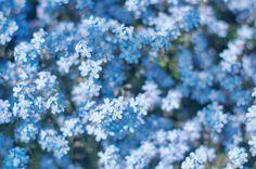 20140607_ Цветы, Растения