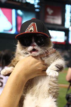 When Grumpy Cat ACTUALLY likes something. #DBACKS #Arizona #Baseball #GrumpyCat #MLB