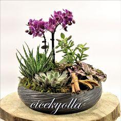 Star Orkide ,orkide siparişi,orkide arajmanı,mini orkide