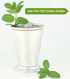 Mint Julep - get ready for the Kentucky Derby!
