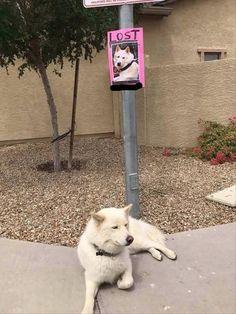 lost dog - hmmm...I wonder where he is