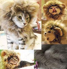 百獣の王に仲間入り! 犬 猫 ペット用 たてがみ風 ウィッグ ライオン 耳付き (ライオンウィッグ, フリーサイズ(25-30cm))