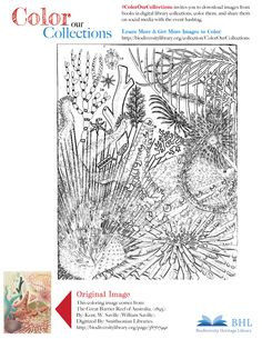 1000 Images About BHL Coloring Pages On Pinterest