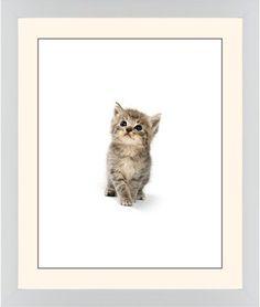Kitten Framed Print, White, Contemporary, Black, Cream, Single piece, 16 x 20 inches