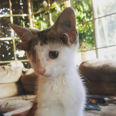 A family found two tiny kittens under their house and knew they had to help. One of them is quite special. Meet Frankie, short for Frankenkittens. Georgi @frank_n_kitten Little Frankie was a young kitten when the family found him along with his brother. They cared f...