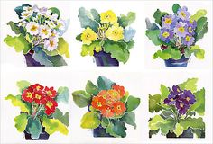 Primrose prints - pretty watercolors for the dining room?