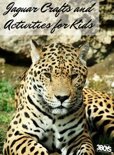 These jaguar crafts and activities for kids are perfect for a jungle unit study! Rainforest Crafts, Jungle Crafts, Rainforest Theme, Amazon Rainforest, Jaguar Animal, World Thinking Day, Science Activities For Kids, Preschool Crafts, Fun Learning