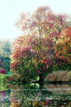 Monet - tree by water