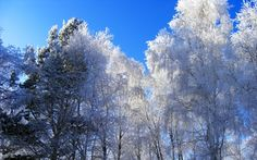 trees winter HD Wallpapers, Wallpapers For Desktop, Android, Iphone,nature wallpapers,anime wallpapers,car wallpapers