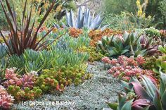 Succulent Plants: An Overview   Succulents are surging in popularity …