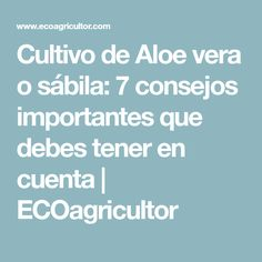 Cultivo de Aloe vera o sábila: 7 consejos importantes que debes tener en cuenta | ECOagricultor