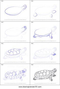 How to Draw a Pond Slider step by step printable drawing sheet to print. Learn How to Draw a Pond Slider 3d Drawings, Animal Drawings, Drawing Sketches, Sketching, Drawing Animals, Pond Drawing, Tiger Drawing, Snake Drawing, 3d Drawing Techniques