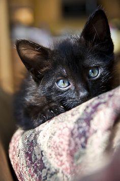 ラブリー-KittyCats、ilovecatsok:365分の198ケイシーdで、Flickrで。