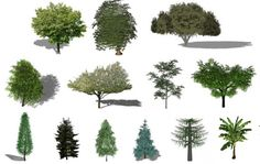 Refresh the Greenery in your Renders with this Free Library of Plants for SketchUp, via OneCommunity