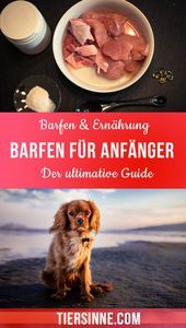 Barefoot for beginners - The ultimate guide to getting started The word barfen meant . Prey Animals, Animals And Pets, Things To Do At Home, Raw Food Recipes, Cute Dogs, Cooking, Health, Tauriel, Dogs