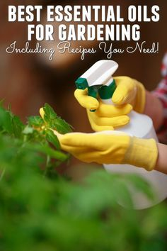 Do you want to know how to use essential oils in your garden? Read on to learn about the best essential oils for gardening and grab some recipes too!