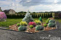 Zielonym do góry... - strona 5 - Forum ogrodnicze - Ogrodowisko