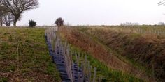 Made by the Forge again donated their tree planting money to the Suffolk Wildlife Trust. In March 2015 the Trust's volunteers planted an enormous amount of trees to reinstate part of a green lane on the Arger and Spouse's Vale land.