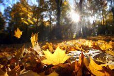 4 gode app's til efteråret Royalty Free Photos, Autumn Leaves, Apps, Clip Art, Pumpkin, Stock Photos, Artwork, Outdoor, Albert Camus