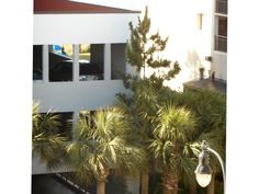Palm trees across the street from the hotel we stayed at. HS Beach Trip 2015    #beachboundwithmrs-robin!!