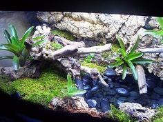 reptile decor | .com - Reptile Supplies, Vivarium, Reptile Accessories, Reptile ...