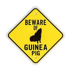 Beware Of Guinea Pig