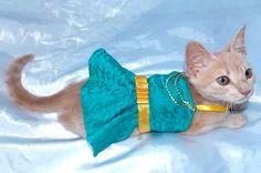 vestido madame pet pinscher chihuahua gata cães tamanho xxp