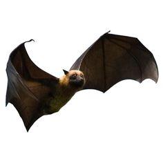 Squeedorable... Set of 6 Flying Fox Bats Vinyl Wall Decals by WilsonGraphics.