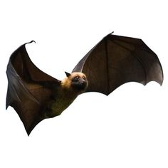 Set of 6 Flying Fox Bats Vinyl Wall Decals by WilsonGraphics, $35.00