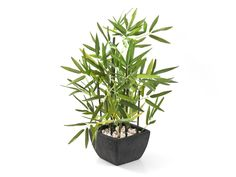 BAMBOO IN SLATE POT from Mr Price at R170.