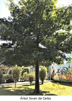 Sidewalk, Plants, La Ceiba, Central America, Medicinal Plants, Dominican Republic, Trees And Shrubs, Side Walkway, Walkway