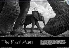 Interview • Anup Shah  Born in Kenya, award-winning wildlife photographer Anup Shah revisited his roots for his latest book, The Mara, an account of daily life in Kenya's Maasai Mara National Reserve. WPM chats to the photographer about how he works to capture the authentic personalities of wild animals...  Read the article in the March issue of Wild Planet Photo magazine, out now.