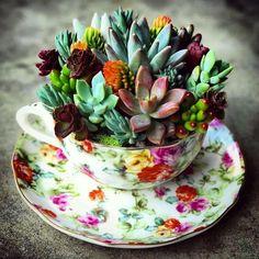 Beyond cute!! ☕ #cactus #cacti #bohoinspo #gypsyinspo #Bohemian #gypsy